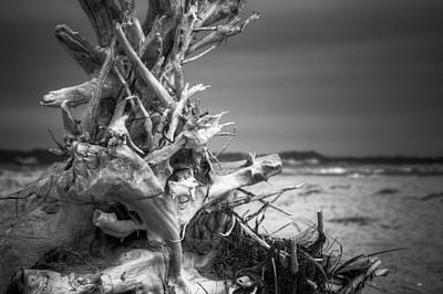 Driftwood At Race Point Poster