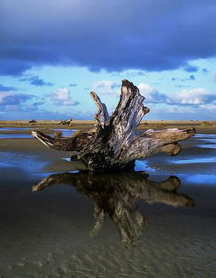 Driftwood Found Near Siltcoos Beach Poster by Robert L. Potts