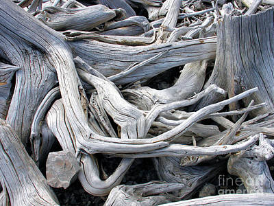 Poster featuring the photograph Driftwood by Gerry Bates