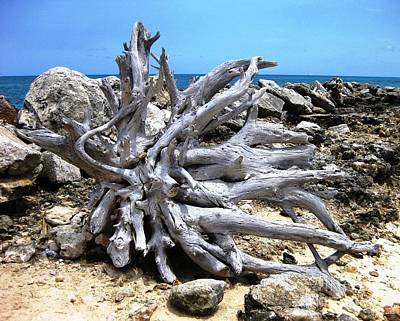 Poster featuring the photograph Driftwood by Judy Palkimas