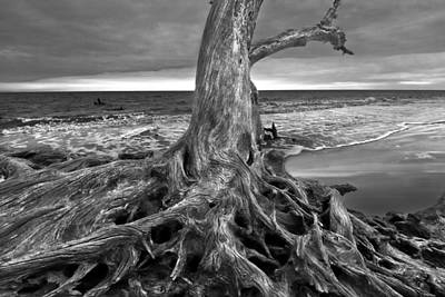 Driftwood On Jekyll Island Black And White Poster by Debra and Dave Vanderlaan