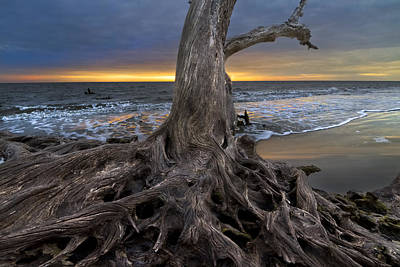Driftwood On Jekyll Island Poster by Debra and Dave Vanderlaan