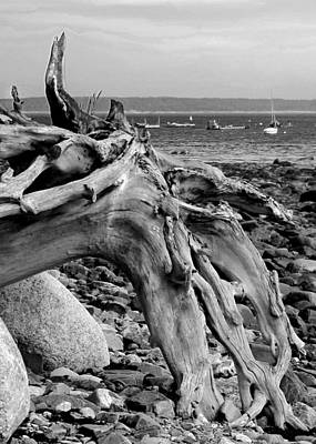 Poster featuring the photograph Driftwood On Rocky Beach by Jemmy Archer