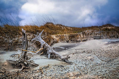 Driftwood On The Dunes Poster by Debra and Dave Vanderlaan
