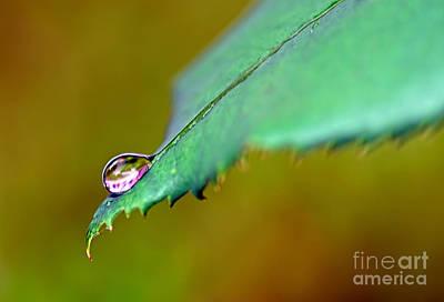 Droplet On Rose Leaf Poster