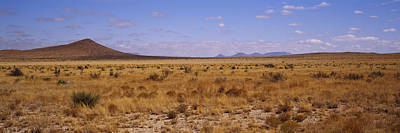 Dry Grass And Bush At Big Bend National Poster by Panoramic Images