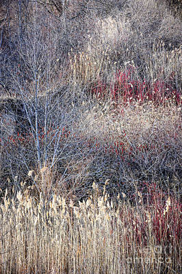 Dry Grasses And Bare Trees Poster