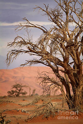 Dry Tree In The Desert Poster