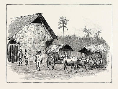 Drying Sheds For Tobacco, Sumatra, Indonesia Poster