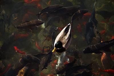 Ducks And Fish Poster by Bonita Hensley
