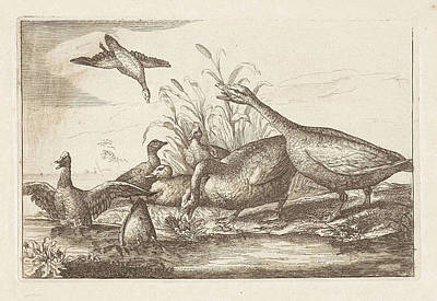 Ducks And Geese, Francis Barlow, Pieter Schenk Poster