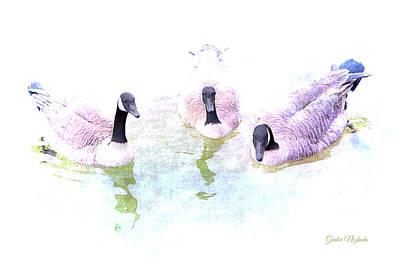 Ducks Poster by Gunter Nezhoda