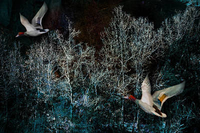 Poster featuring the photograph Ducks In Trees West Fork Number Three by Bob Coates