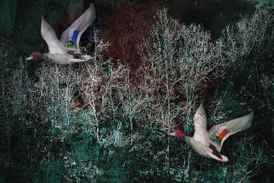 Poster featuring the photograph Ducks In Trees West Fork Number Two by Bob Coates