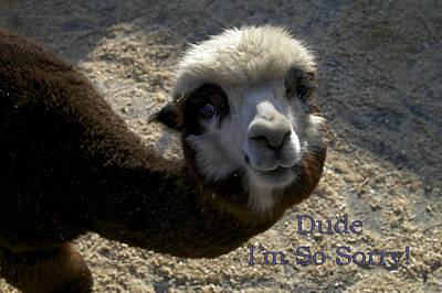 Dude Im So Sorry Poster