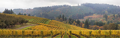 Dundee Oregon Vineyards Scenic Panorama Poster by Jit Lim