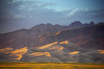 Dune Delight Poster
