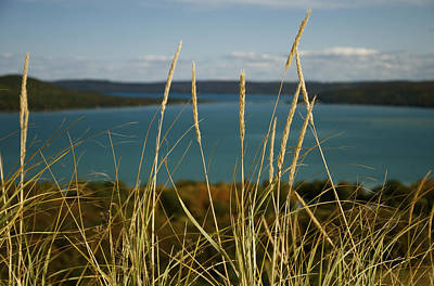 Dune Grass On A Sunny Fall Day Poster