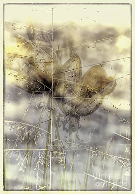 Dune Grass On Yucca Poster
