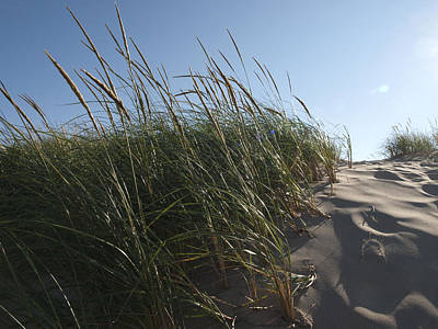 Dune Grass Poster by Tara Lynn