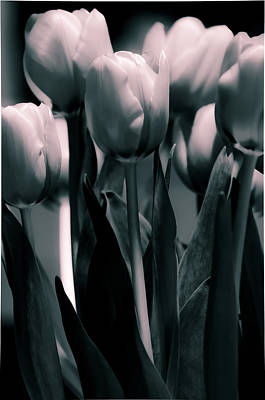 Poster featuring the photograph Duo-toned Tulip by Craig Perry-Ollila