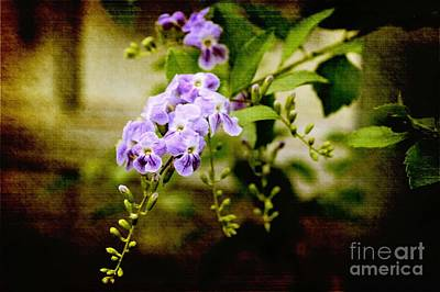Duranta Bush Poster by Rosemary Aubut