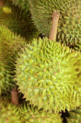 Durians, Can Duoc Market, Long An Poster