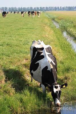 Dutch Cow Poster by Sara  Meijer