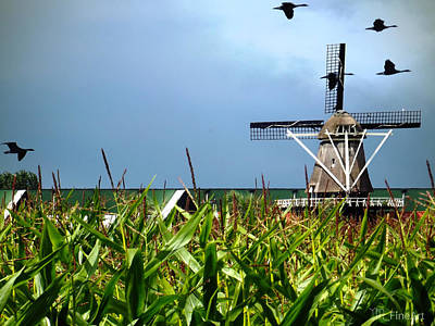 Dutch Windmill In Summer Poster