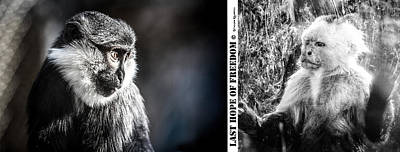Poster featuring the photograph diptych Last hope of Freedom  by Stwayne Keubrick
