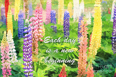 Each Day Is A New Beginning Colorful Lupine Flowers Poster by Beverly Claire Kaiya
