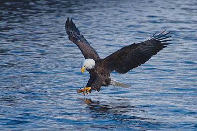 Eagle Fishing Poster