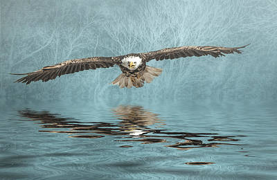 Poster featuring the photograph Eagle On Misty Lake by Brian Tarr