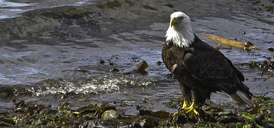 Poster featuring the photograph Eagle On The Beach by Timothy Latta