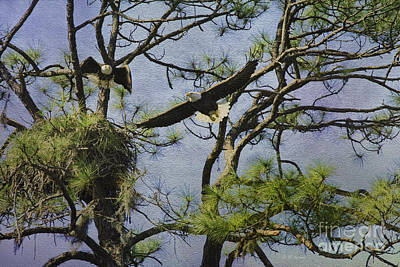 Eagle Pair And Nest Poster by Deborah Benoit