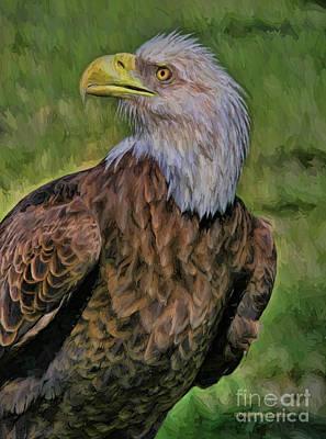 Eagle Portrait Oil Poster by Deborah Benoit