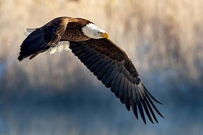 Eagle Sore Poster