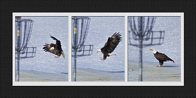 Eagle Triptych Poster by Rob Graham
