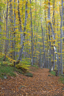 Poster featuring the photograph Early Autumn Vitosha Mountain Forest Bulgaria by Jivko Nakev