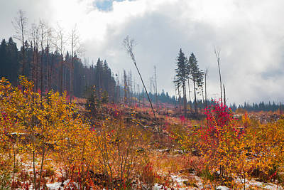 Poster featuring the photograph Early Autumn Yellow Red Colored Mountain View by Jivko Nakev