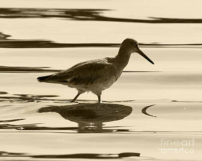 Early Morning In The Moss Landing Harbor Picture Of A Willet Poster