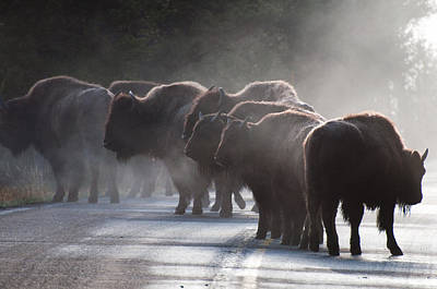 Early Morning Road Bison Poster