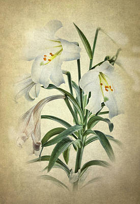 Easter Lily Poster by Robert Jensen