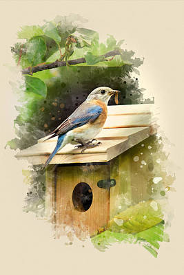 Eastern Bluebird Watercolor Art Poster by Christina Rollo