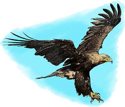 Eastern Imperial Eagle Poster