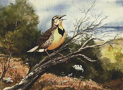 Eastern Meadowlark Poster by Sam Sidders