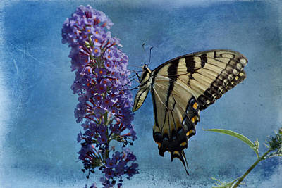 Eastern Tiger Swallowtail Butterfly 2 Poster by Sandy Keeton