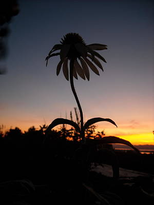 Echinacea Sunset Poster
