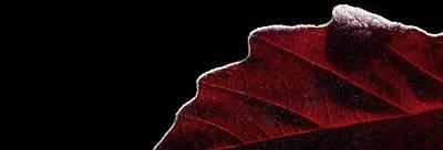 Edge Of Autumn Poster by Steven Milner