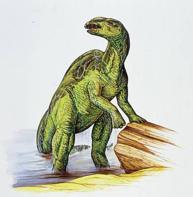 Edmontosaurus Dinosaur Poster by Deagostini/uig